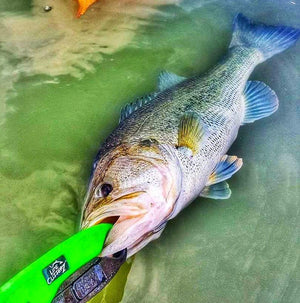 COMBO DEAL - Line Cutterz Ring + Lunker Tamers by The Fish Grip