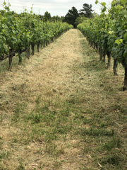 Cline Vineyards | Unconventional Woman Blog