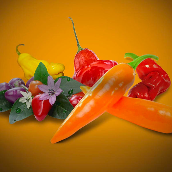 Exotic and Novelty Pepper Seeds