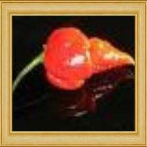 Trinidad Scorpion. Put this on your Hot Peppers List as one of the HOTTEST...it is also Kin to the Naga Viper.