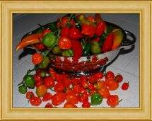 Chile pepper bounty