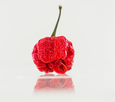 Face-melting Carolina Reaper - the hottest chili in the world