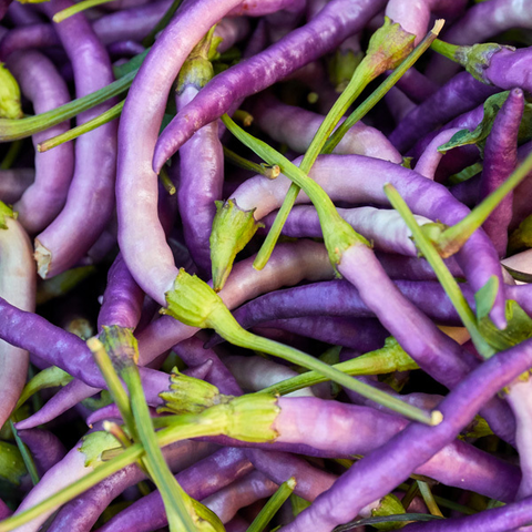 purple cayenne