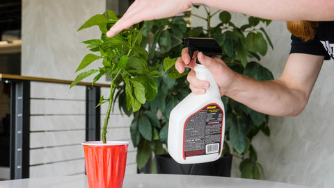 Use Smite to kill aphids, spider mites, and other pests on pepper plants