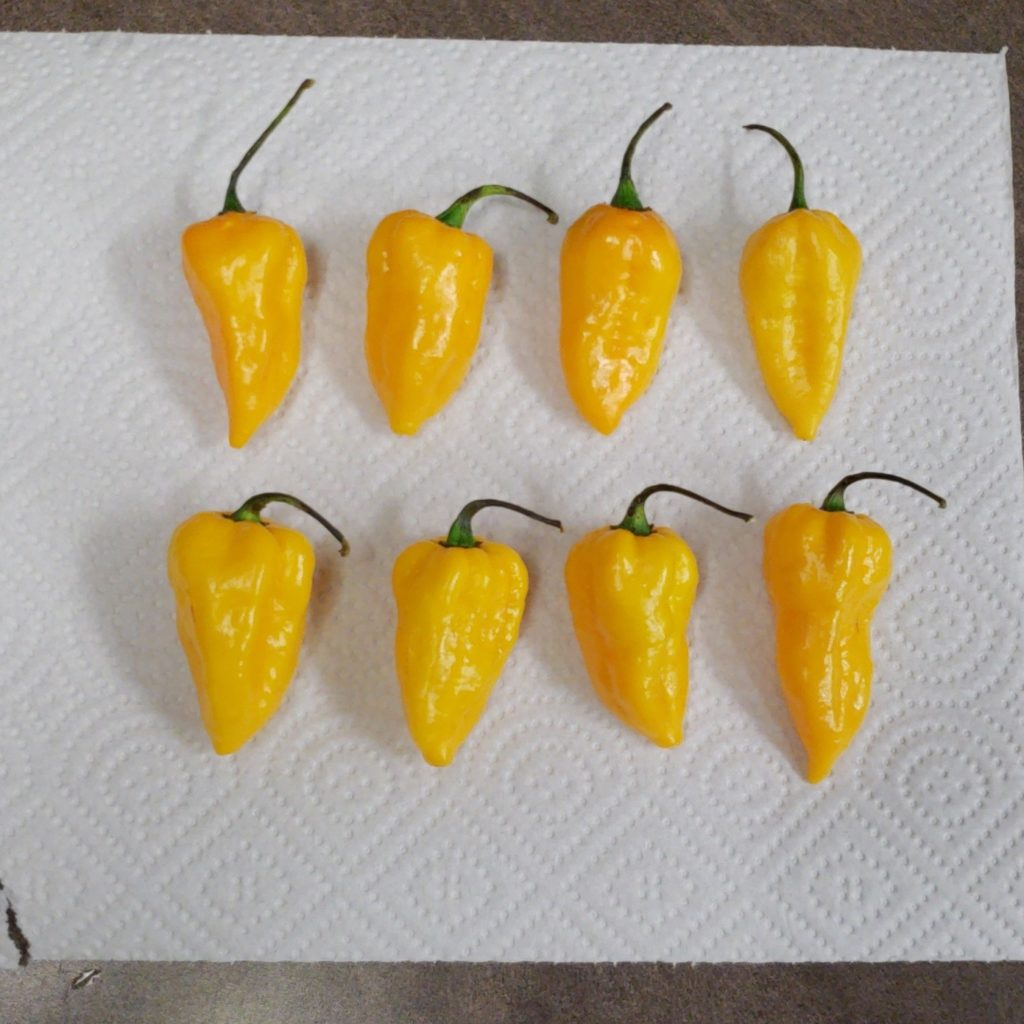 Freezing Hot Peppers