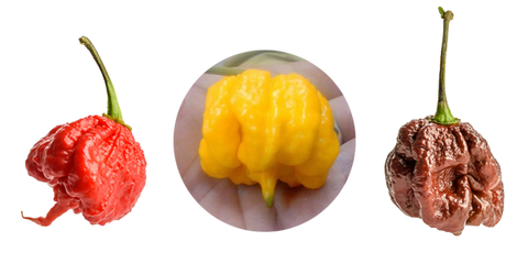 Get the classic Carolina Reaper, the smoky Chocolate Reaper, and citrusy Yellow Reaper Seeds all at once!