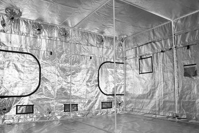 reflective interior of large grow tent, with white steel poles along side and in middle of tent, and exhaust ducts cinched with black drawstrings