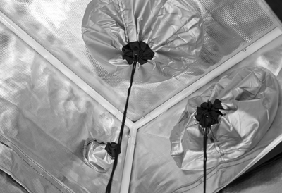 reflective interior of grow tent, with white steel poles and exhaust ducts cinched with a black drawstring
