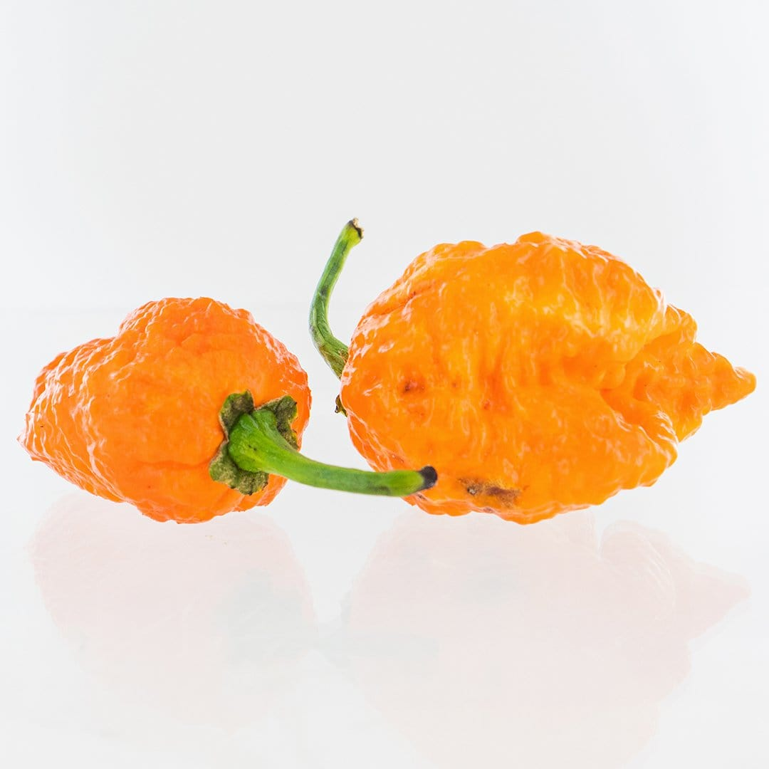 Apocalypse Scorpion X Jays Peach Ghost Scorpion Pepper Seeds