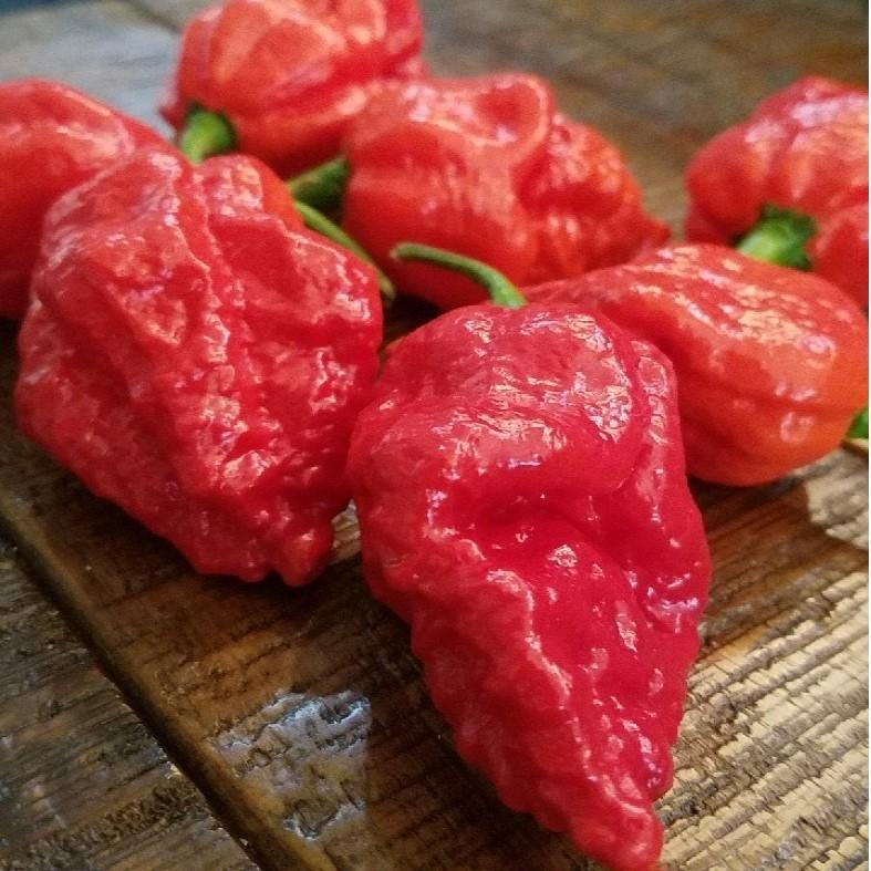 Apocalypse Scorpion Pepper Seeds