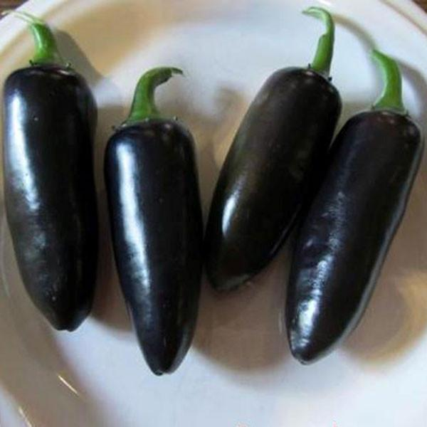Black Jalapeno Hot Pepper - Pepper Joe's