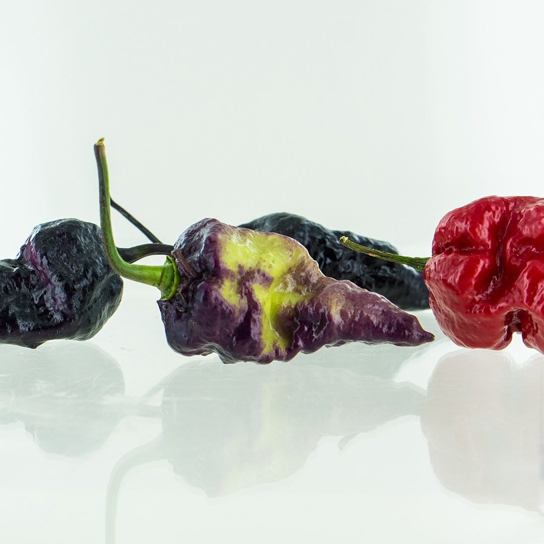 Black Naga Brain (Black Bhut x Chocolate NagaBrains) Pepper Seeds