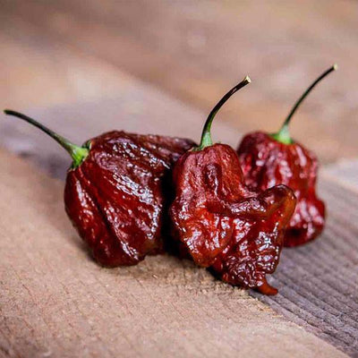 CPR Chocolate Primo Reaper Hot Pepper Seeds from Pepper Joe's