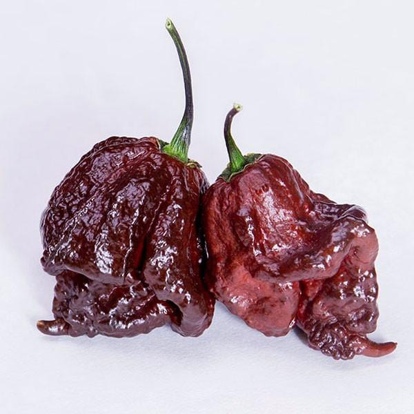 CPR - Chocolate Primo Reaper Pepper Seeds - Pepper Joe's