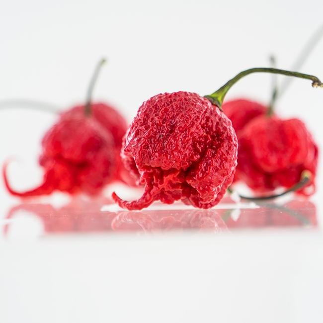 Carolina Reaper Seeds - Pepper AKA HP22B