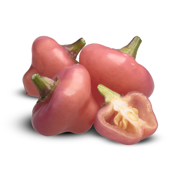 Cheiro Roxa pepper pinkish color, pepper pod and membrane