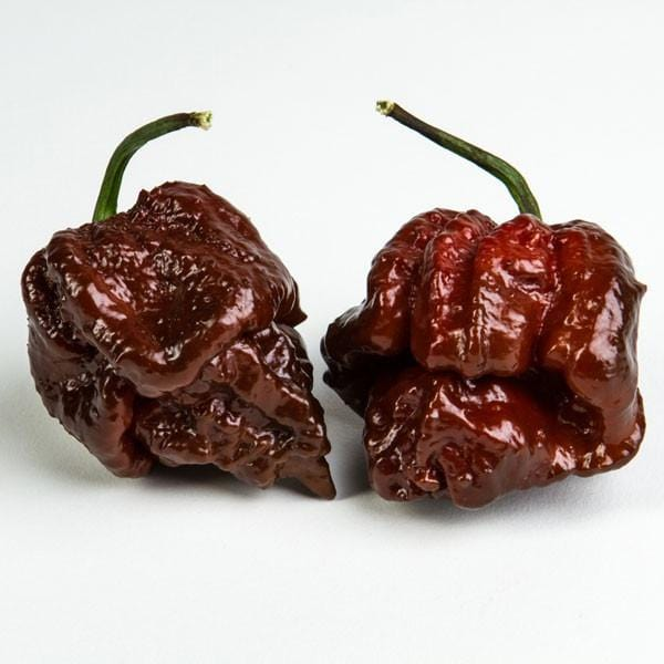 Chocolate Moruga - Hot Pepper - Pepper Joe's
