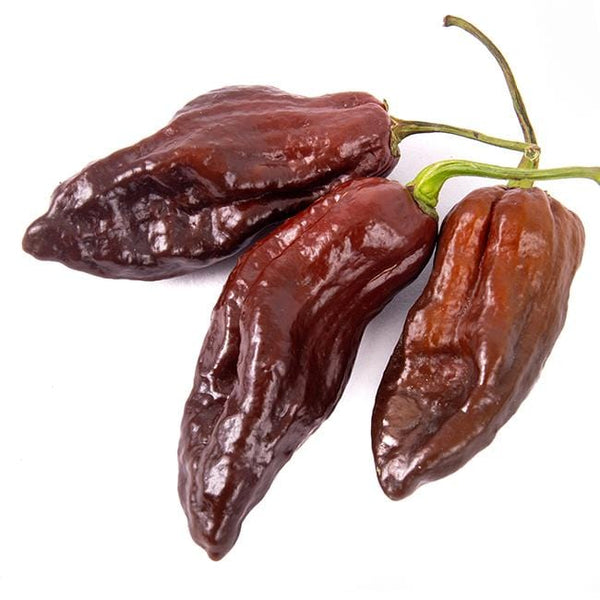 Premium Seed Packet Possibly The Hottest In The World Chocolate Bhutlah Heirloom Pepper 50