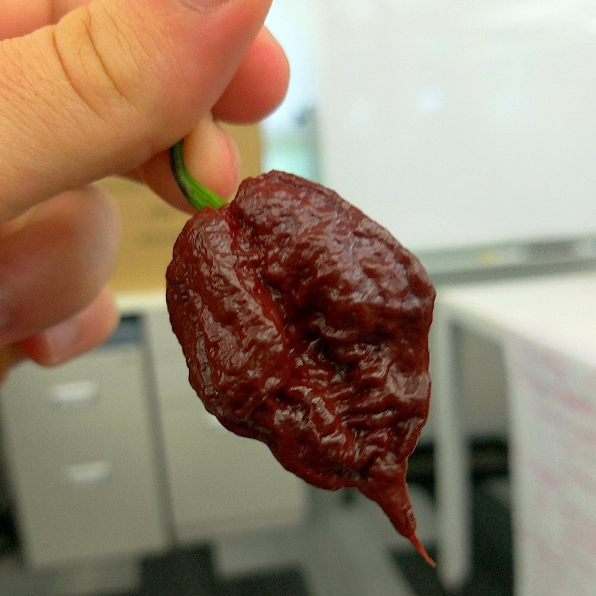 Chocolate Carolina Reaper Seeds - Pepper Joe's