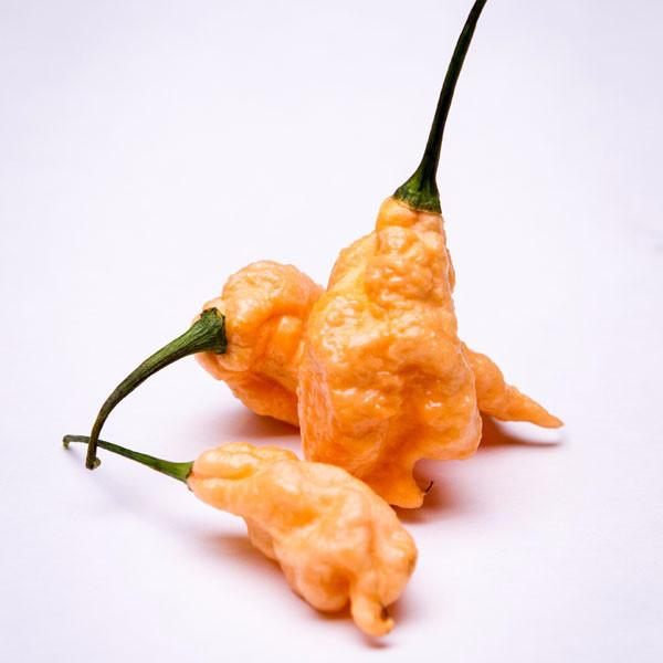 Jay's Peach Ghost Scorpion Seeds from Pepper Joe's