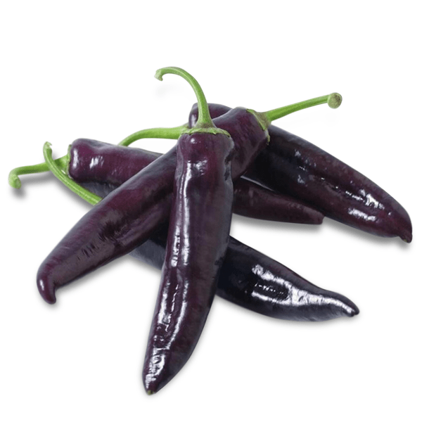 a giant marconi sweet pepper, a purple marconi pepper is one of three peppers in the marconi pepper family