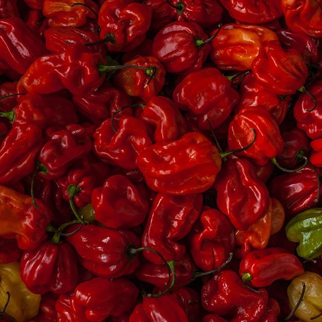 Trinidad Moruga Scorpion Chili Record Guinness of Spicy 200 Seeds Fresh
