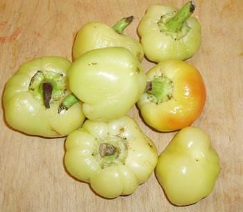 Apple Hungarian Pepper Seeds