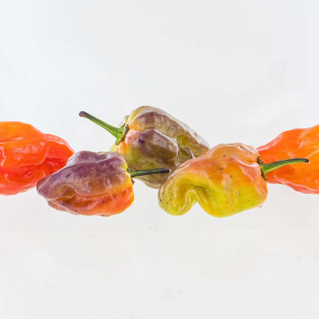 Bhut Jolokia Purple Pepper Seeds
