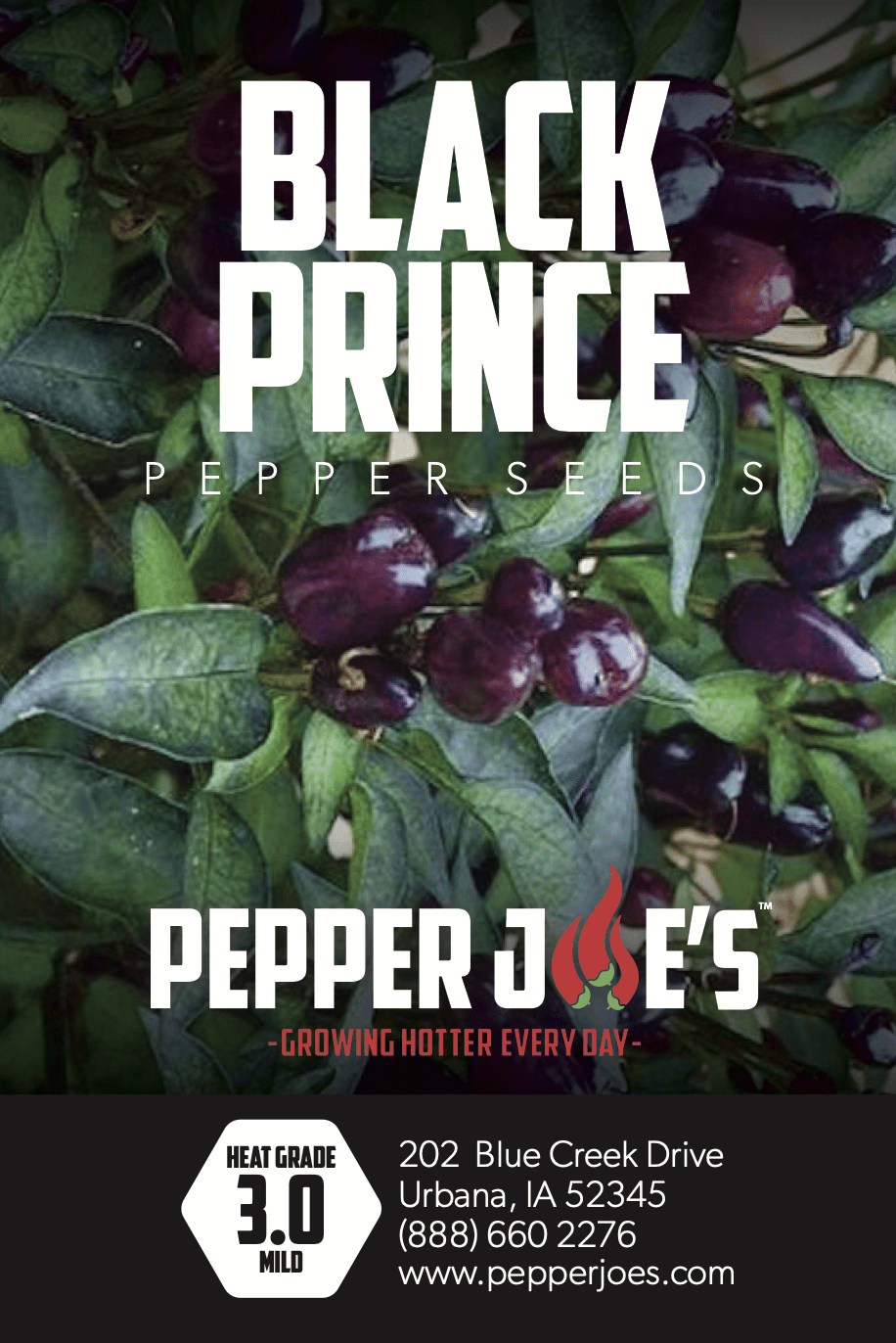 Black Prince Pepper Seeds