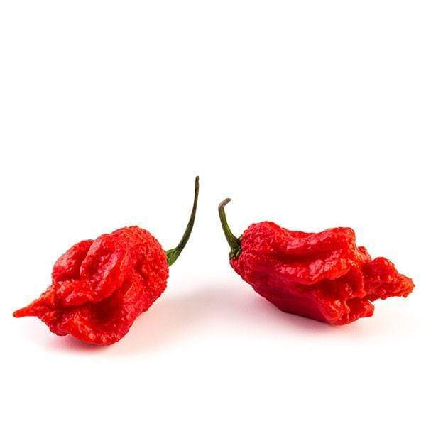 Two red Carolina Reaper pepper pods with green stems on a white background.