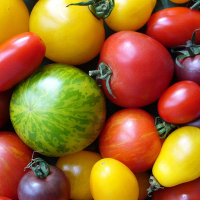 Heirloom Tomato Set exclusively at Pepper Joe's