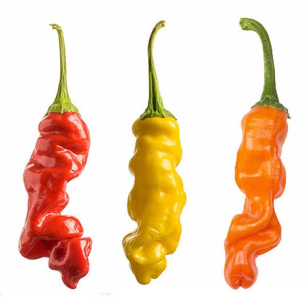 Peter Pepper Rainbow Collection - Exotic Hot Pepper - Pepper Joe's