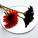 Round Circle Table Display Plate Acrylic Mirror - Suave Petal
