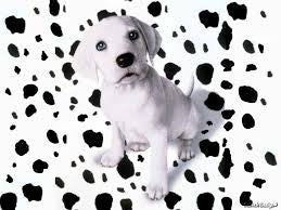 Dalmation Diaper Service Packages