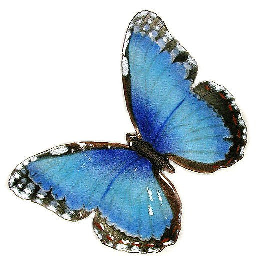 Blue Morpho - Open Wing