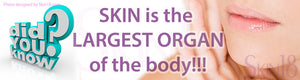 Skin is the longest and most important organ of your system