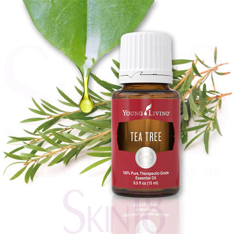 Young Living Tea Tree (Melaleuca Alternifolia) Essential Oil