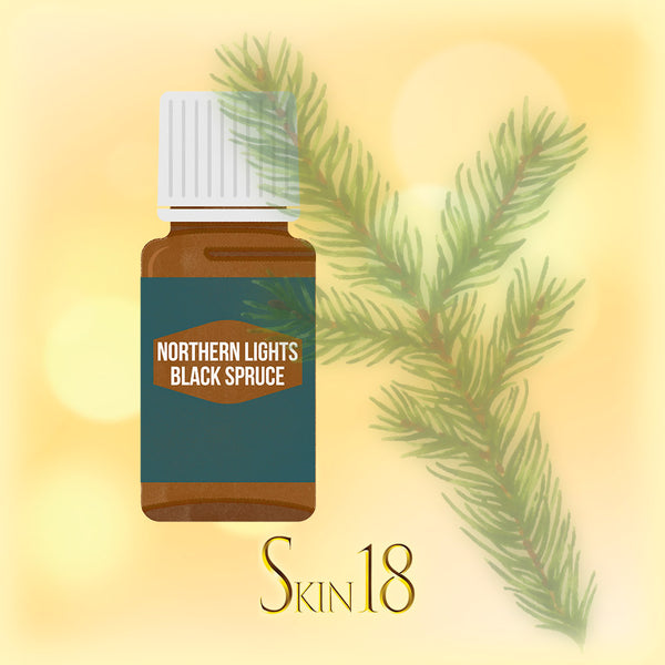 Northern Lights Black Spruce Essential Oil Single