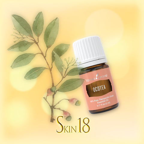 Ocotea Essential Oil Single