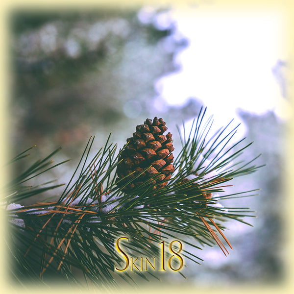 Pine Essential Oil Single