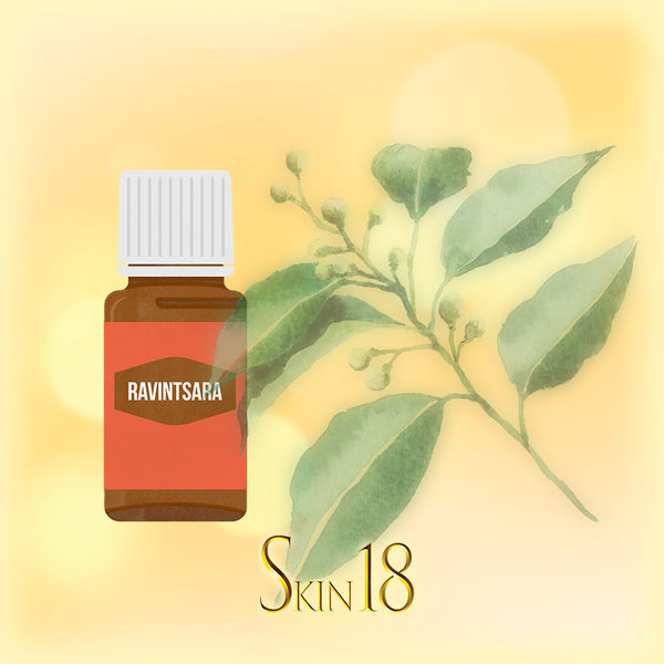 Ravintsara Essential Oil Single