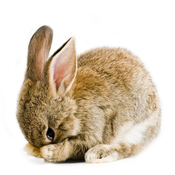 Don't be a bunny, prepare for new laser standards and guidelines now