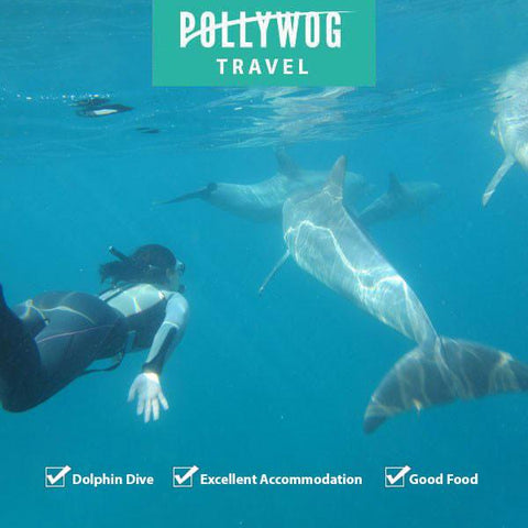 Mozambique - Ponto Dolphin Encounters