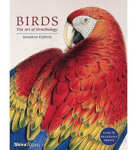 Birds : The Art of Ornithology (boxed set) - the exhibition catalogue from Natural History Museum available to buy at Museum Bookstore