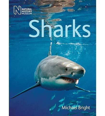 Sharks - the exhibition catalogue from Natural History Museum available to buy at Museum Bookstore