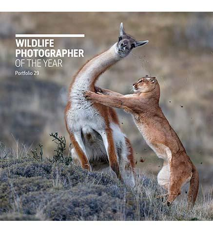 Wildlife Photographer of the Year : Portfolio 29 - the exhibition catalogue from Natural History Museum available to buy at Museum Bookstore