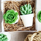 Succulent soap gift set - Handmade gifts at Sunbasil Soap