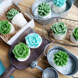 We are Rooting for You Succulent Soap Gift Set