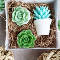 Watch Me Grow Succulent Soap Gift Set perfect gift ideas for baby shower gifts handmade soap at Sunbasil soap
