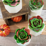 Varigated Succulent Soap : Fall www.sunbasilsoap.com